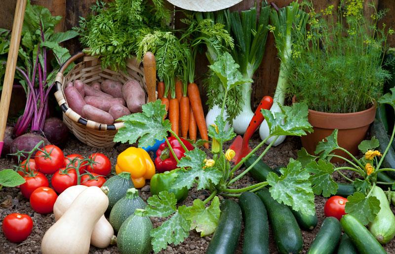 Planting-a-Vegetable-Garden