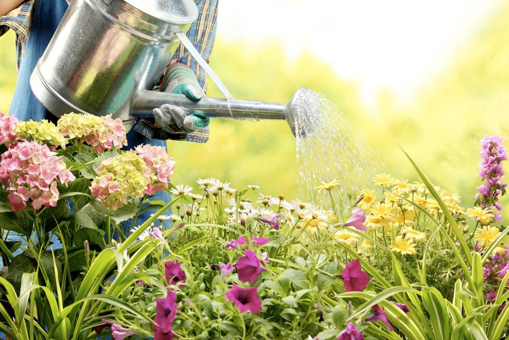 Watering-Flowers---