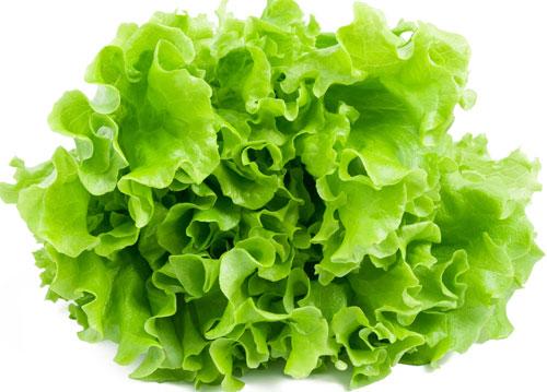 lettuce-(1)-history
